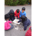 Sorting and categorising sea life in wild play