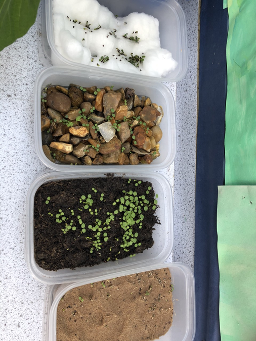 We investigated what Plants need to grow.
