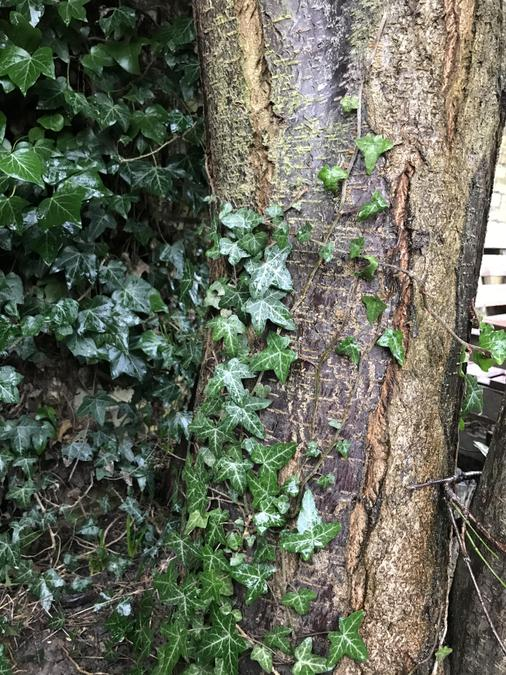 Look closely at trees outside - beautiful, textured bark and glossy Ivy leaves.