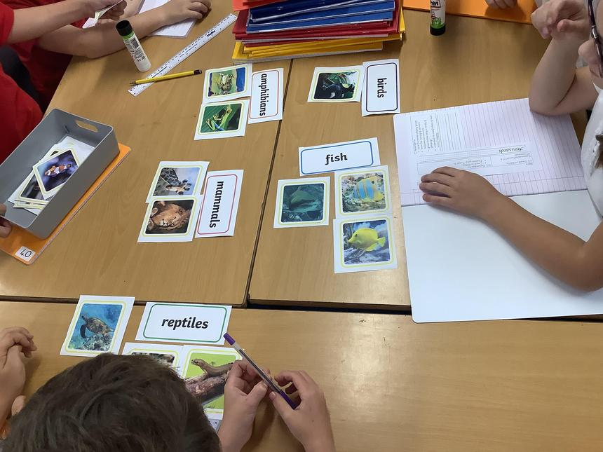We have sorted animals into their classification groups.