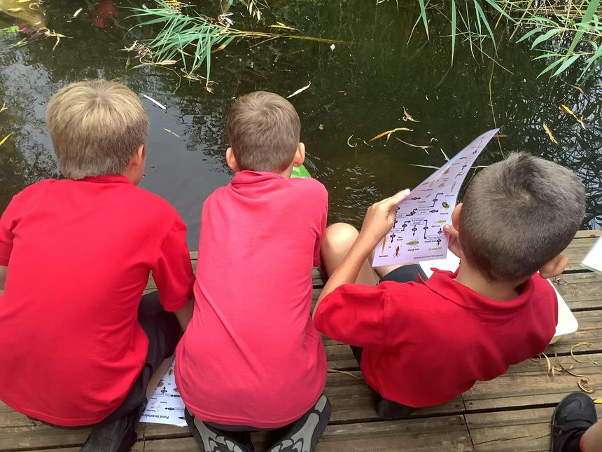In Science, we have used classification keys to identify the creature living in our pond.