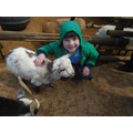 Stroking the goats