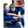 We've been looking at the different parts of plant