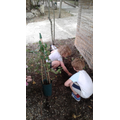 Planting a parents gift to the nursery