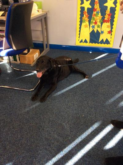 Nursery loved our special visit from Molly the dog.
