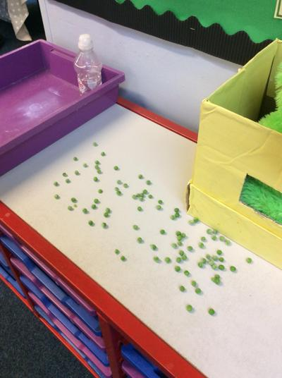 The Evil Pea has been in the classroom
