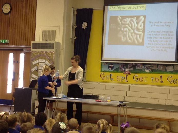 Science Week Digestion Assembly