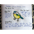 Bird fact file- Beau