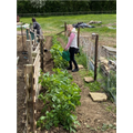 Working hard on the allotment.