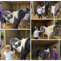 Looking after the ponies
