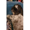 Lottie - Miss S's pooch.