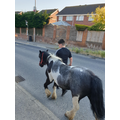 An evening stroll with the pony!