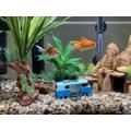 Meet Bob and Steve (James B's fish)