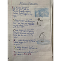 Olivia's Adelie Penguin research
