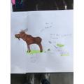 Frankie's Moose - Bert