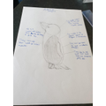 Penguin facts by Evie