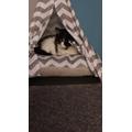 Sugar - Miss S's cat