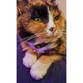 Miss Hulland's cat Mia