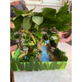 Daisy's habitat project