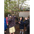 Looking for plants in our local environment