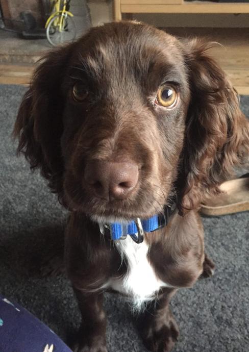 Watson - School dog