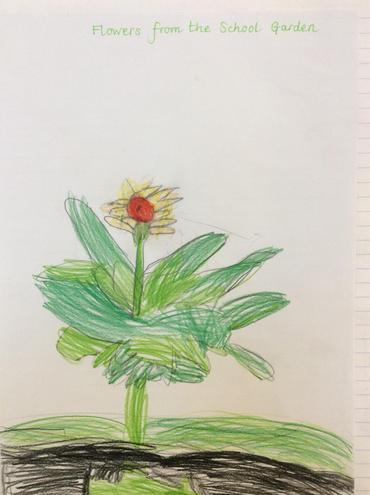Flowers from our beautiful school garden