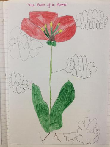 The parts of a Flower: A Beautiful Depiction