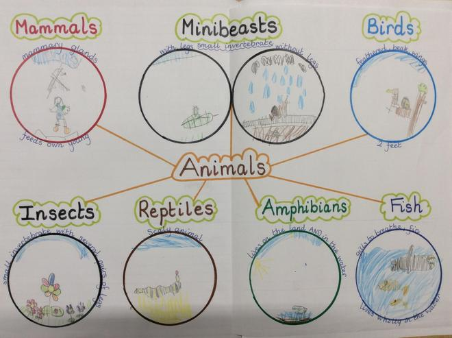 Depicting different types of animal