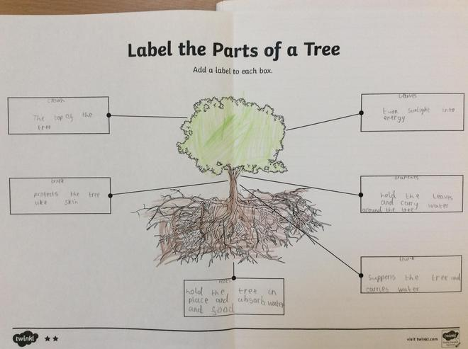 What is the job of each part of a tree?
