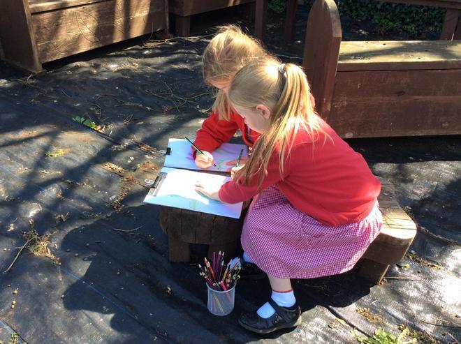 Plants: Observational drawings in the school garden