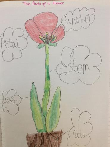 The Parts of a Flower: Look at the different shades