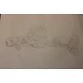 Sketchbook - Close observational drawing