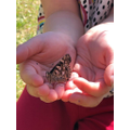 Lucy's butterfly