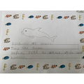 Jackson's fabulous dolphin fact file