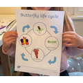 Lily's butterfly life cycle