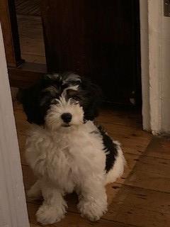 Frank, our school dog.