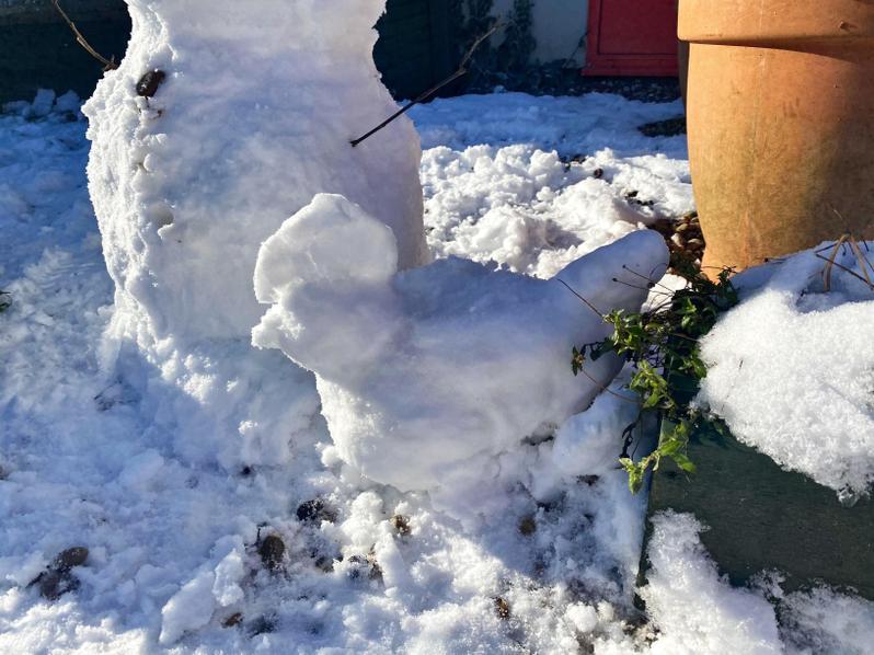 Year 34 Snow Chicken!