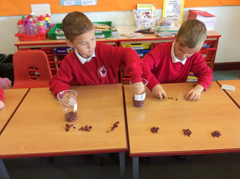 Counting kidney beans