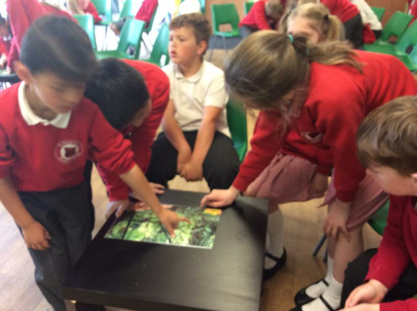 Finding animals in the rainforest!