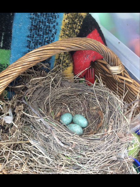 We have found a nest in our reception garden!