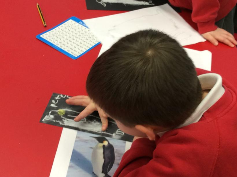 We looked closely at Emperor Penguins.