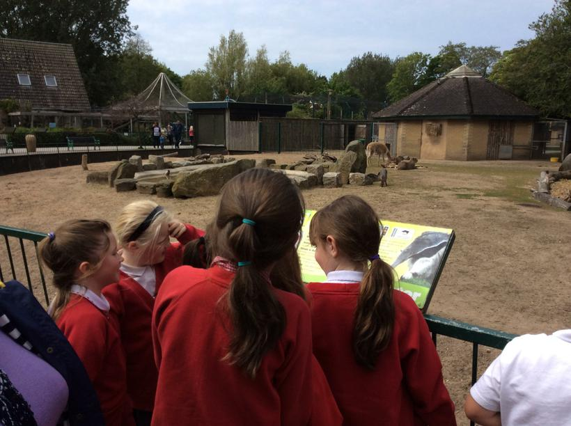 Meeting animals of the rainforest!