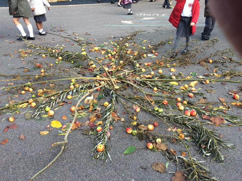 Windfall apples form our own trees