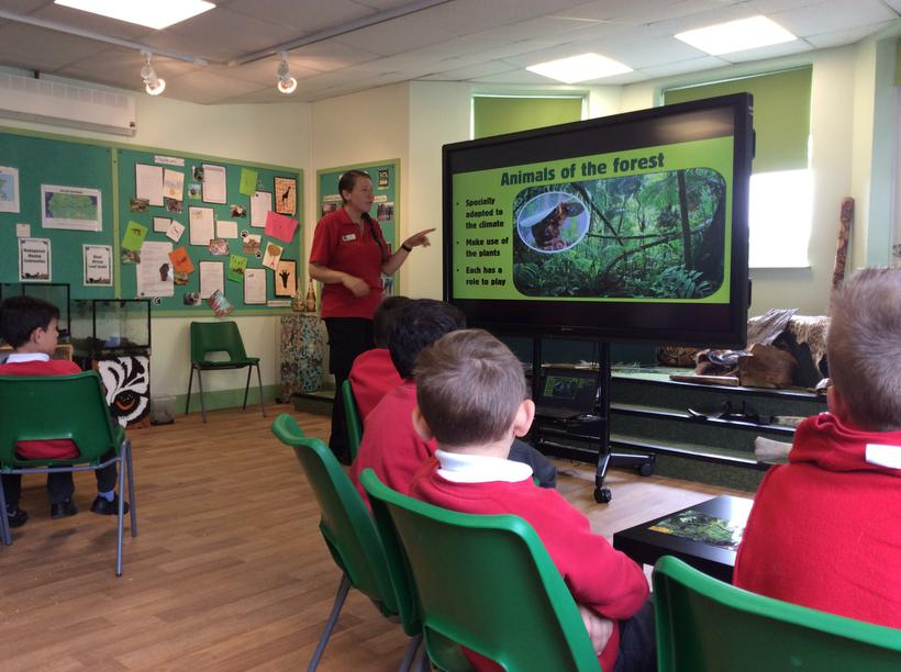 Learning about life in the rainforest!