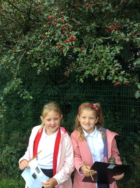 Hawthorn berries and Hawthorn girls!