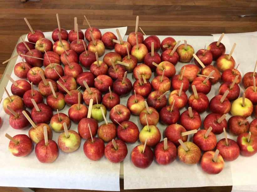 We harvested our apples from the orchard