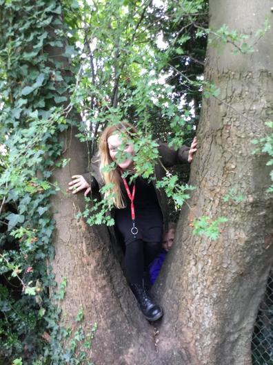 Miss Parkin climbed through the tree.
