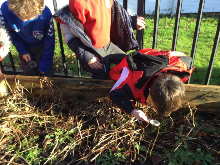 Searching for insects in school microhabitats