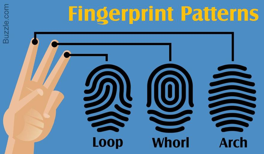 Most fingerprints fall into one of 3 patterns