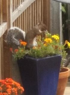 Hanah: Cheeky squirrel